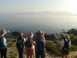 fynbos trail; whale watching